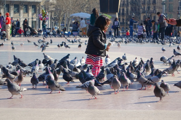 Bird feeding at Catalunya Square